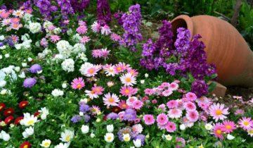 Осенние цветы и цветники
